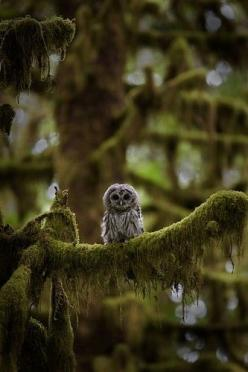 .: Animals, Tree, Nature, Baby Owl, Forest, Things, Birds, Hoot, Owls