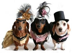 """baaaahaahahaaaa! This is entitled """"Moulin Rouge!"""": Red Mill, Animals, Stuff, Pets, Costume, Rouge Doxies, Things, Wiener Dogs"""