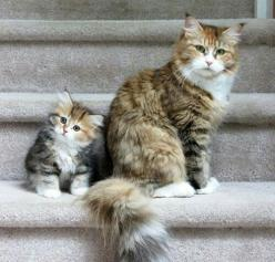 Beautiful like my mommy.  Apple did not fall far from the tree here.: Cats, Kitty Cats, Animals, Mother, Daughter, Baby, Cats Kittens, Photo
