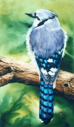 Blue Jay  Intrepid by IrisNorwood on Etsy, $60.00: Colored Pencil, Feathery Friends, Blue Jay