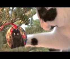 Cats Help Decorate The Christmas Tree : Video: Christmas Cats, I M Climbing, Watch, Animal Videos, Tree Cats, Fun, Christmas Trees, Tree Neow