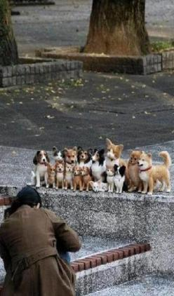 class picture...: Picture, Photos, Cat, Animals, Dogs, Pet, Funny, Family Photo, Group Photo