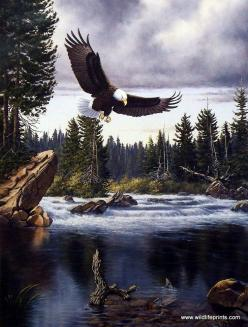 Derk Hansen Nature's Medley-Eagle: To, Artist Derk, Nature S Medley Eagle, Derk Hansen, Water Birds, Eagles Pics, Hansen Nature S