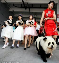 Dogs that want to be as cool as pandas. Or people that want pandas as pets but can't have them.: Panda Dogs, Animals, Pets, Chow Chow, Pandadog, Pandas, China