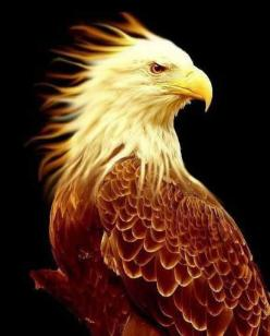 Eagle of fire staying  in God's Glory: Animals, God S Glory, Birds Eagles, Art, Bald Eagle, Fire Staying, Gods Glory, Native American