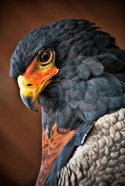 Explore Pranavian's photos on Flickr. Pranavian has uploaded 478 photos to Flickr.: Beautiful Birds, Eagles, Photo, Close Up, Animal