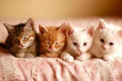 feel like school time for the kitties, haha, cute!!: Cats, Kitty Cat, Animals, So Cute, Pets, Adorable, Kittens, Kitties, Cat Lady