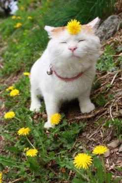 FLOWER CHILD @Jenn Thompson, Merrily Yours thought of you ;): Cats, Animals, Hippie, Peace, Funny, Smile, Kitties, Kitty