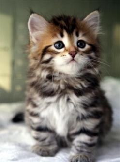 From imgfave.com: Cats, Kitty Cat, Animals, Sweet, Baby, Cute Kittens