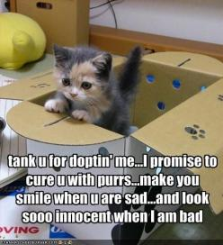 funny-pictures-kitten-is-thankful-that-he-is-adopted: Cats, Animals, Funny Cat, Pets, So True, Funny Animal, Kittens, Kitty, Cat Lady