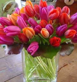 gorgeous tulips: Wedding Color, Sunflowers Tulips, Coloured Tulips, Beautiful Tulips, Colorful Roses