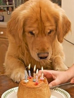 He might be only part of your life, for him, you are his everything, the only person in his whole life. Precious :): Animals, Happy Birthday, Dogs, Life, Quote, Pets, So True, Friend, Golden Retriever