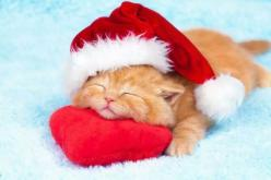 He might sleep through the holidays! #kittens #pets #christmas facebook.com/sodoggonefunny: Christmas Pets, Christmas Cats, Christmas Animals, Christmas Kittie, Santa Hat, Kitty, Cute Kittens, Christmas Kitten