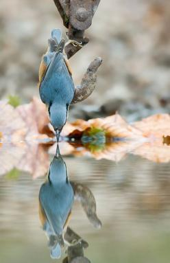 How long does one wait with their camera for this moment?: Photos, Animals, Nature, Reflections, Beautiful Birds, Photography