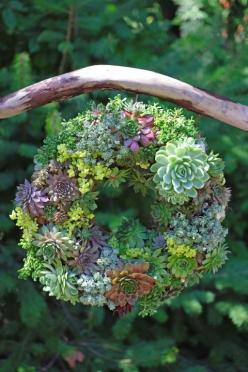 How to make a (gorgeous!) succulent wreath. Everyday Eden shares instructions at Garden Therapy.: Succulent Wreath, Succulent Terrarium, Delicious, Living Wreath, Wreaths