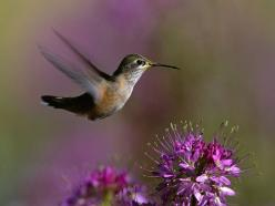 Hummingbirds : ): Humming Birds, Animals, Nature, Hummingbird, Bird Wallpaper, Wallpapers, Beautiful Birds, Flowers, Hummingbirds