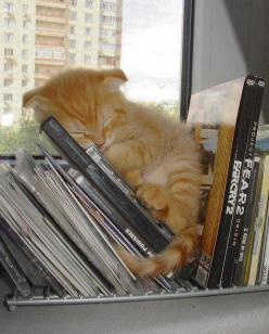I don't like cats, but this is cute!: Cats, Animals, Sweet, Cat Nap, Pet, Book, Kittens, Kitty