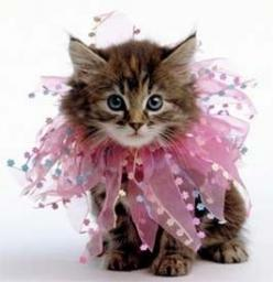 I tried doing this to Gwen once, but she started eating the little rhinestones off the hairband, so I had to take it off her.: Kitty Cats, Sweet, Pet, Darling Kitten, Kitty Kitty, Cats Kittens, Animal