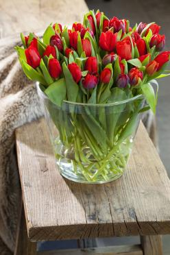 i would love red  tulips instead of roses: Rose, Beautiful Flowers, Bloom, Red Tulips, Floral Arrangement, Flowers, Garden, Flower