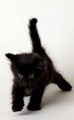 If black cats are bad luck then I'm quite happy to have all the bad luck in the world.: Kitty Cat, Black Kitty, Black Fluffy Cat, Black Cats, Baby, Black Kittens, Cats Kittens, Cute Kittens, Animal