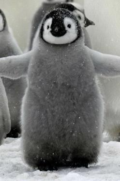If that doesn't make you smile, get thee to a doctor. Baby penguin hug - squee!: Free Hugs, Babies, Animals, Happy Feet, Things, Babypenguin, Baby Penguins
