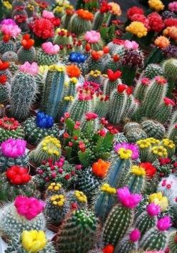 In order to exist in a reality of unwavering love, honor and compassion, you must create that in the here and now. --Sandra Walker: Succulent, Cactus Flowers, Nature, Cacti, Color, Beautiful, Plants