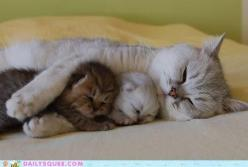 Let the cute animals begin - Page 2 - The eBay Community: Cats, Animals, Mothers, Sweet, Pets, Baby, Kittens, Kitty
