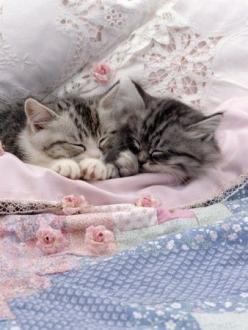 Little Angels - Click for More...: Kitty Cats, Animals, Sweets, Pets, Kitty Kitty, Baby, Kittens, Things