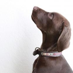 Little West on the sweetest little GSP: German Shorthair, Gsps, Critter, Southwestern Style