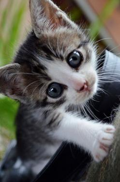 """Looks a lot like the little wild kitten that was """"mine"""" -- lived under my greatgrandmother's trailer until mom cat and rest of litter were deported for having started killing her beloved bird visitors.: Kitty Cats, Animals, Sweet, Pet, Cats Ki"""