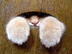 Meow ^_^: Kitty Cats, Cats Katzen Chats, Window, Cats Dogs All, Animals Mostly Cats, Search, Animals Cuteness, Cats Kittens
