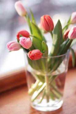 my forever favorite flower: A Tulips, Gardening Flowers Trees, Favorite Flowers, Window, Tulips, Posts, Beautiful Flowers