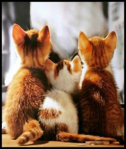 ok now if you get on my back and the little one gets on yours...we can get up there and knock over that bag of treats.  #cats #cat: Kitty Cats, Animals, Sweet, Meow, Pet, Kitty Kitty, Kittens, Feline