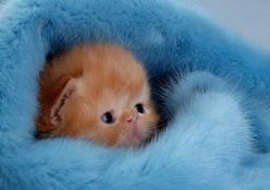 Omg!!!!! About the cutest thing I have ever seen!!!: Cats, Animals, So Cute, Pet, Adorable, Kittens, Baby, Kitty