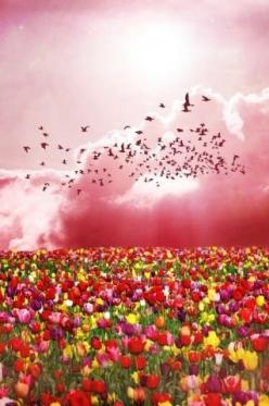 One moment in the valley the next in a field of flowers.  That is how amazing God is!  Don't give up Beauty is near.~Michelle Martin: Tulip Fields, God, Nature, Color, Beautiful, Flowers, Garden