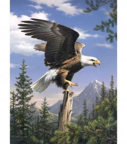 "Reeves Paint By Number Artist Collection 9""X12-Screaming Eagle: Paint By Number, Collection Screaming, Artists Collection, Numbers, Number Artists, Bald Eagle, Eagles, Animal"