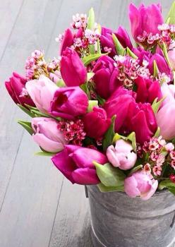 ♔Send her Buckets of Tulips for Mothers Day, she's worth it isn't she? ♔: Pink Flower, Spring Flower, Beautiful, Flowers, Garden, Pink Tulips, Flower