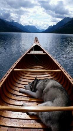 Siberian Husky. Reduced Stress Turbo Charge Read all your self-development books. http://youtu.be/LyO3EkP1TdY: Animals, Best Friends, Boats, Beautiful, Siberian Huskies, Husky Dogs