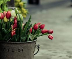 spring: Favorite Flowers, Spring Flowers, Post, Buckets, Tulips Tulips, Bloom, Photo, Garden
