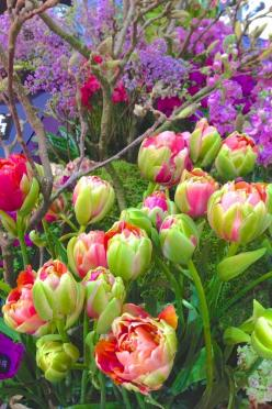Spring Garden Planning. In my perfect garden these would be the perfect colors.: Spring Flowers, Peony Tulip, Color, Gardens, Flower Power, Beautiful Flowers, Tulips, Flower