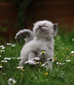Stop and smell the flowers: Cats, Smell, Animals, Pet, Funny, Things, Kittens, Kitty, Flower