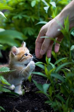 Sweet little kitty ... :): Cats, Hand, Animals, Sweet, Pet, Kittens, Kitties, Kitty