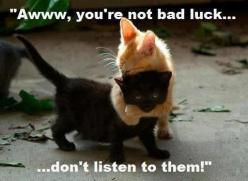 This is dedicated to Dustin, a black cat I once owned.  He was very sweet and playful.: Animals, Hug, Black Cats, Funny, Kittens, Kitty, Friend, Blackcat, Bad Luck