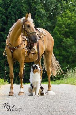 This picture represents my dream horse and my dream dog, both of which I will have hopefully in the next 10 years!: Beautiful Horses, Ranch Dog, Horses And Dogs, Friend, Animal