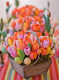 This would be gorgeous in any container. You can find some beautiful containers at my store. www.rhondalangford.willowhouse.com: Idea, Spring Flower, Color, Tulips, Flowers, Centerpieces, Easter Centerpiece, Easter Spring
