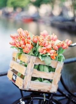 Tulipes+...+...r%c3%a9%c3%a9pingl%c3%a9+par+Maurie+Daboux+%e2%9c%ba%e2%9d%83%e2%9c%bf+%e1%83%a6: Beautiful, Flower Power, Bloom, Tulips, Flowers, Spring, Flower
