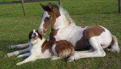 twins from different mothers :): Twin, Animals, Dogs, Friends, Mother, Horses, Pet, Brother, Photo