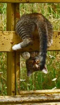 When life throws you for a curve, sometimes you just have to tackle it from another perspective: Kitty Cats, Animals, Silly Kitty, Kitty Kitty, Kittens, Feline, Peek A Boo, Silly Cat