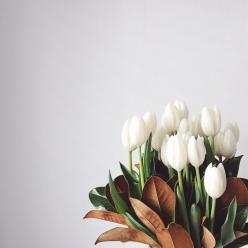 white tulips.: Flowers Plants, White Tulips, Bloom, Photo, Garden, Floral, Flower