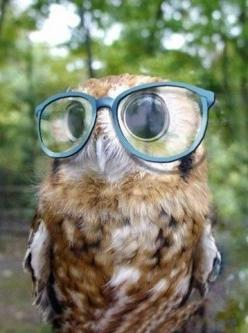 wise old owl: Animals, Hipster Owl, Glasses, Stuff, Funny, Wise Owl, Things, Owls, Eye